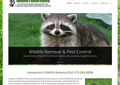 Oneida Wildlife Removal